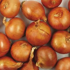 onions-0143