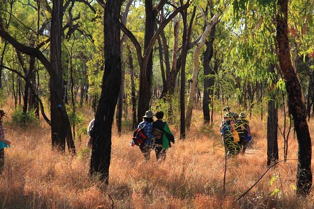 澳洲昆士蘭Undara Experience-清晨Bush walk-20141117-賴鵬智攝-4