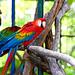 Guyana Zoo Jan 2016 #22