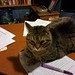Oh, were you marking? Let me help you with that.