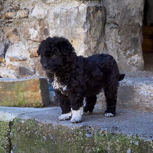 Entregadas las fotos en Llert y encantados! Incluso el nuevo habitante... 😜 #perro #dog #pirineos #instaaragon #igersaragon #igershuesca