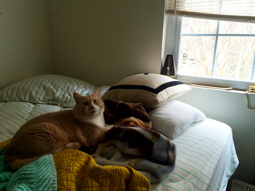 Pumpkin on Ana's Bed (January 26 2015)