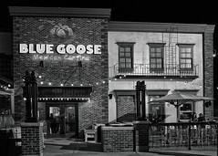 Blue Goose