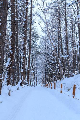japan 北海道 日本 雪 6d 樹 富良野 hokkaidō ef1635mm 森の時計 道北 新富良野王子大飯店 furanoshi 森林精靈陽台
