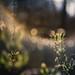 Light meets bokeh by Steph ៚