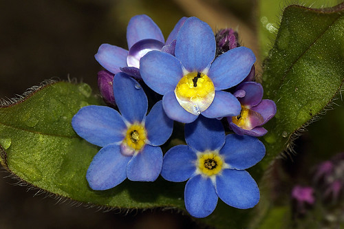 Please... forget-me-not....