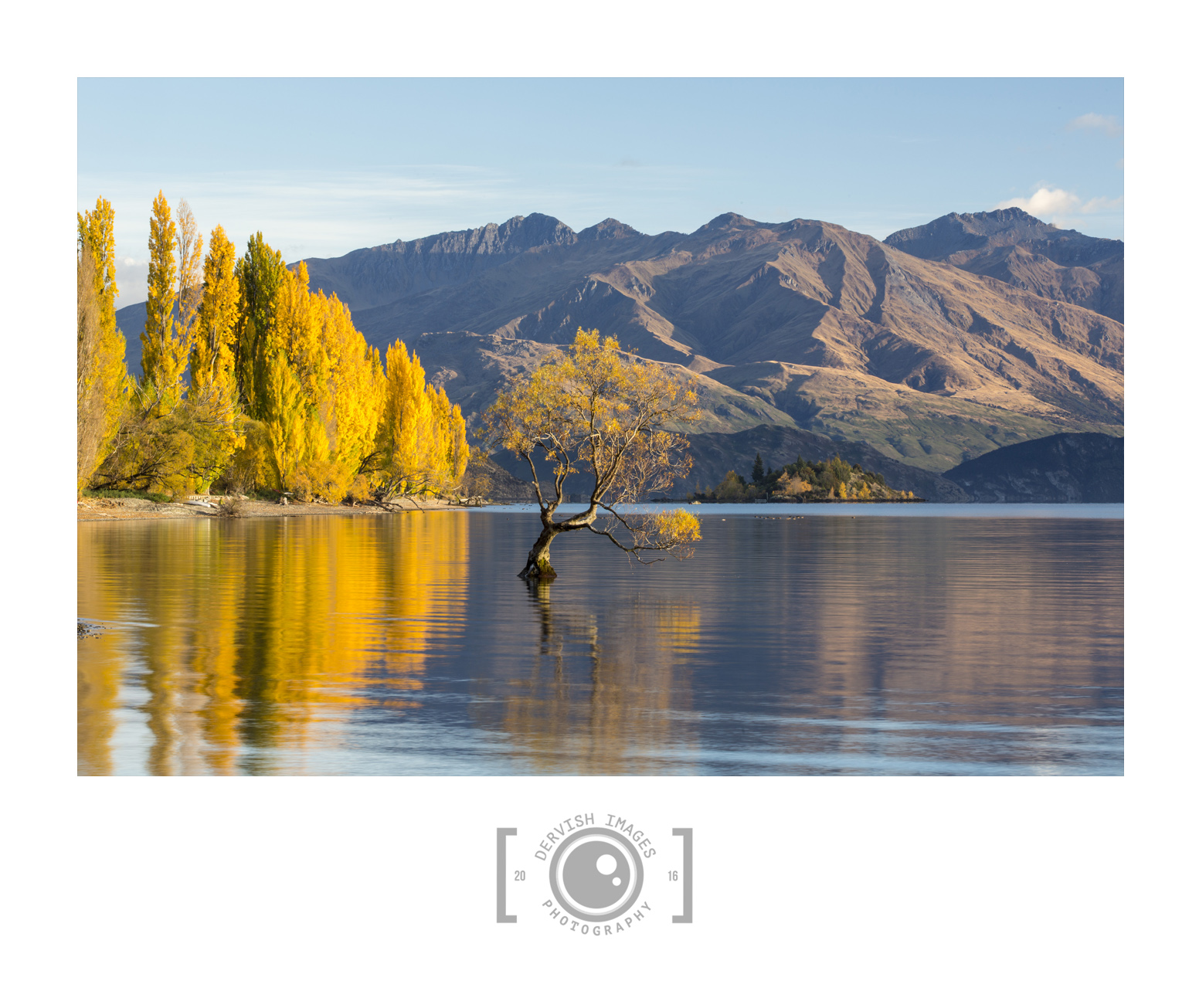 Lone Tree at Wanaka