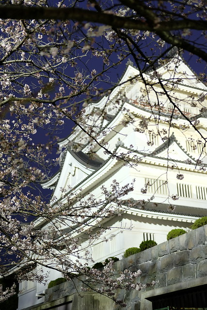 Chiba Castle with cherry blossoms 08