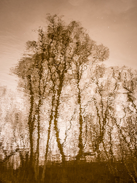 reflections of trees