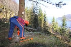 Skog og motorsag, foto Gerd Inger Årnes (4)