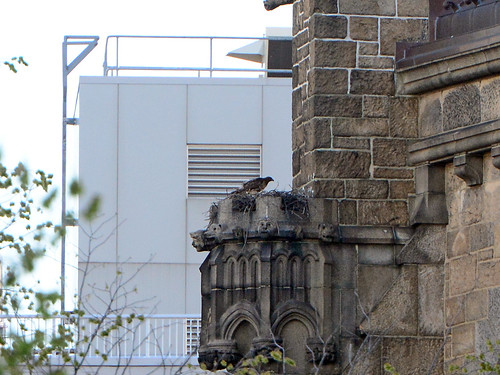 Cathedral Hawk Nest - 7252