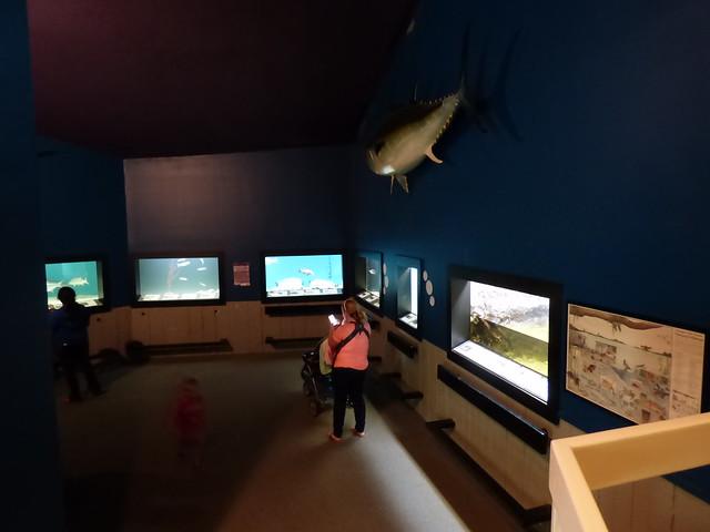 Photo Diary Center For Marine Science Aquarium