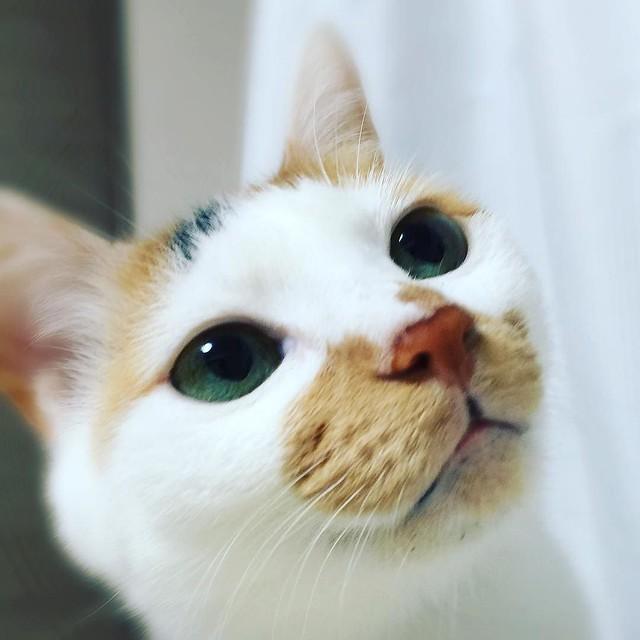 #cat #猫 #ねこ 😮😮😮
