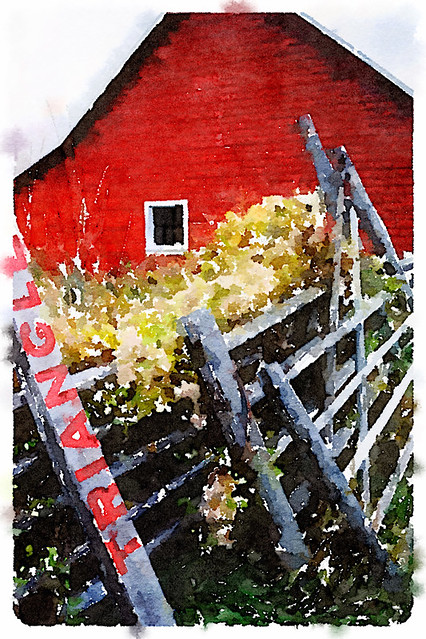The red barn at Triangle Ranch using the photo app Waterlogue 'Vibrant' look