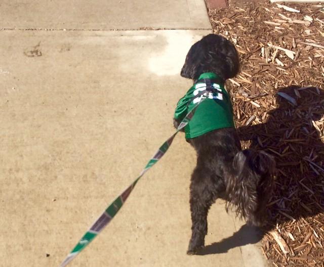 Monty in green