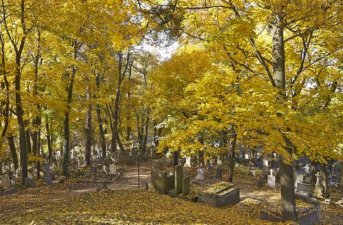 【写真】2015 東欧周遊 : リチャキフ墓地/2015-10-28/PICT4567