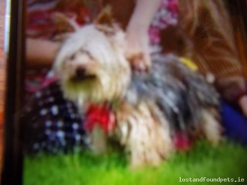 Fri, Mar 4th, 2016 Lost Female Dog - Main Street, Ballinagh, Cavan