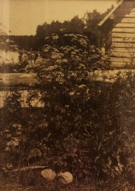 Вильям Каррик. Сныть. 1860-70-е