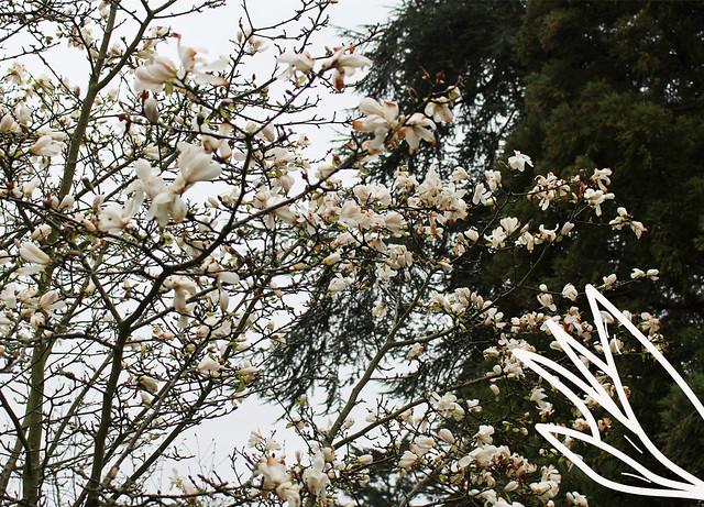 Kew Gardens1