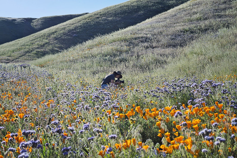 wild flower search