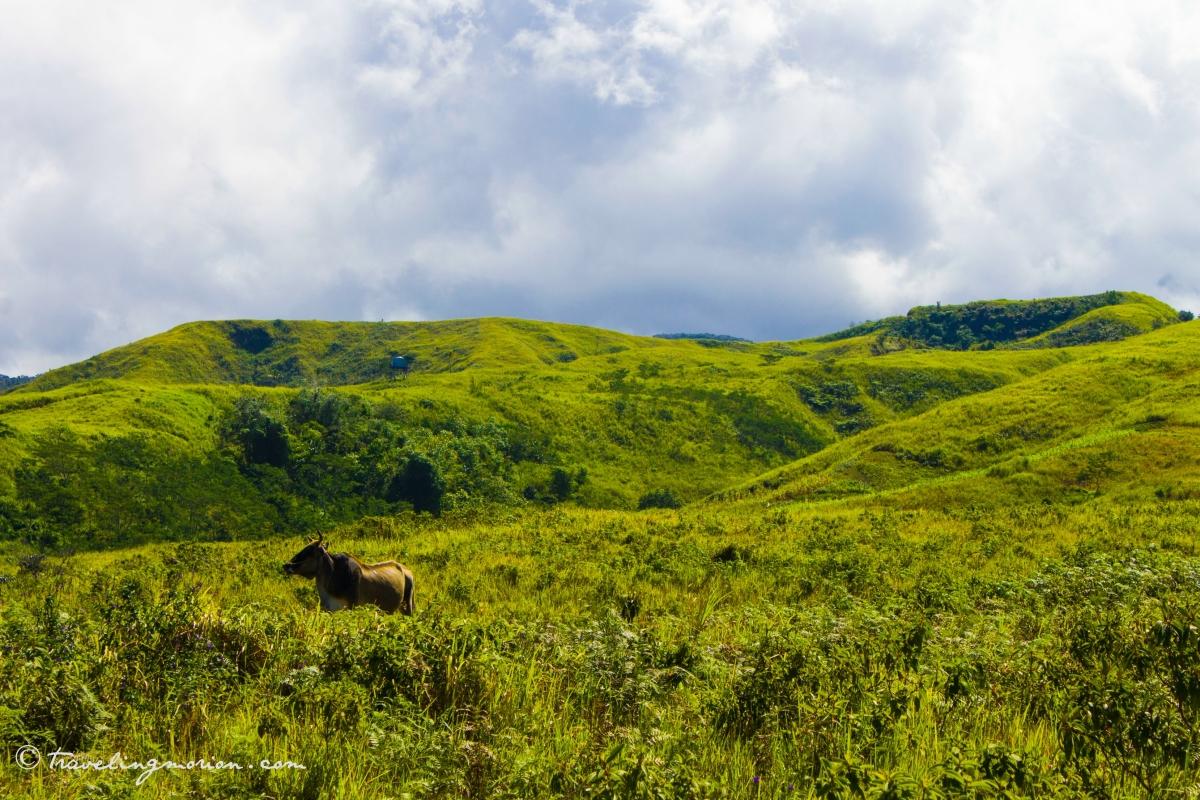 Kaulayanan, Sugbungcogon, Misamis Oriental