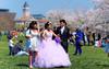 Cherry Blossom Bride - Washington, DC