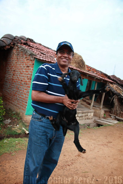Kokkare Bellur ~ Karnataka ~ India ~ 2011