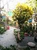 "garden at ""Simon says..."" in San Juan"