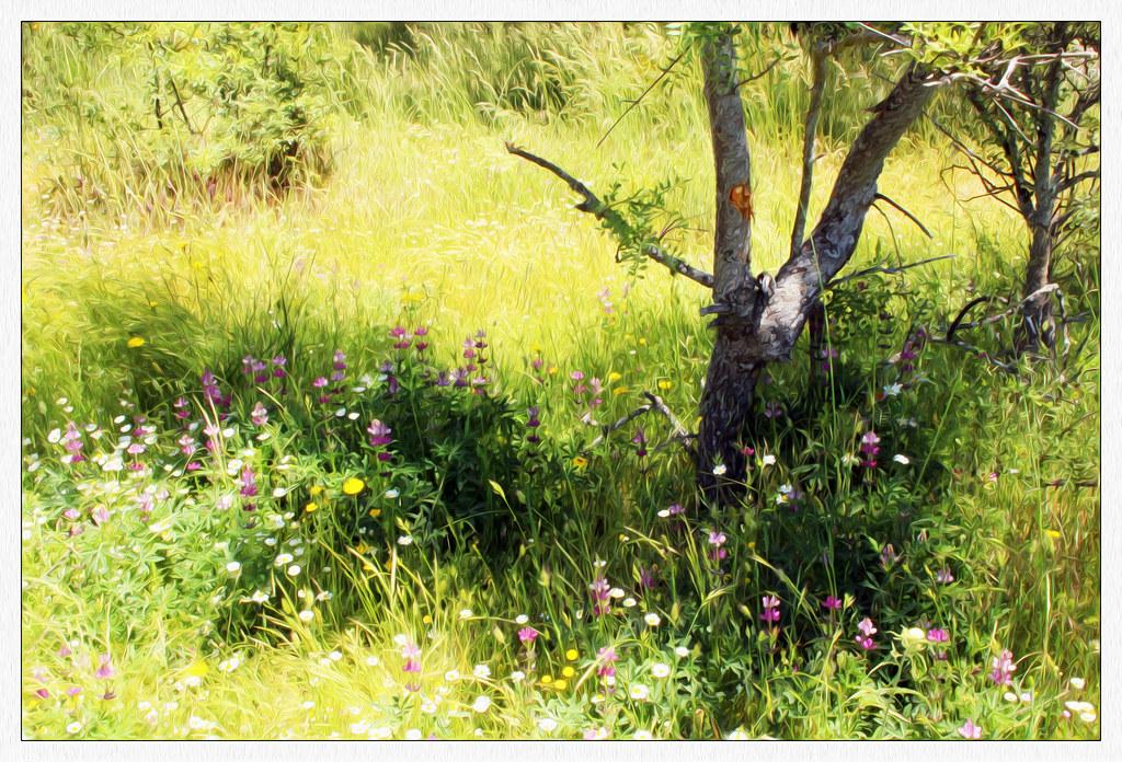 Primavera y Lupinus hispanicus