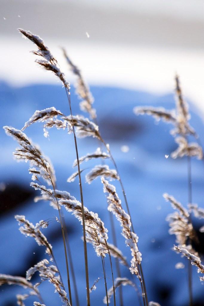 Talvi Kaikki Paketissa