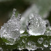 Frost on a grass blade #2 by Lord V