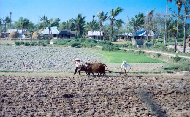 Vietnam 1969-70 by Robin Benton - Duc Pho Planting Time - Quận Đức Phổ, tỉnh Quảng Ngãi