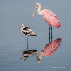 Two Birds,  Two Reflections