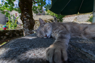 Relaxing on a warm summer day in Lozère