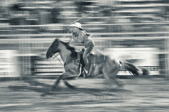Roper at a Gallop