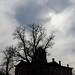 Washington - Against the Sky