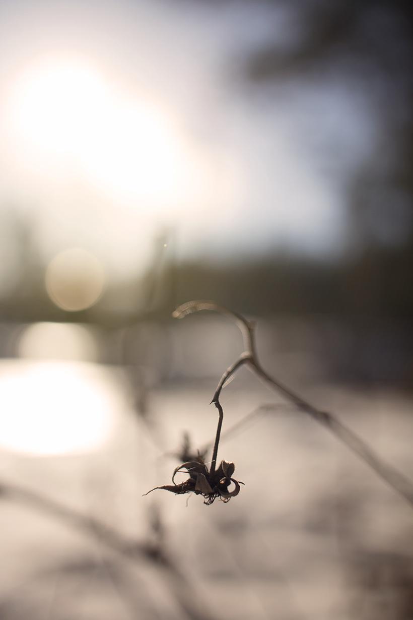 jerE_viinikainen_kevät_luonto_photography1