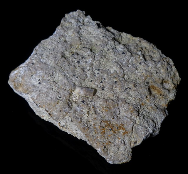 Crinoid fragment