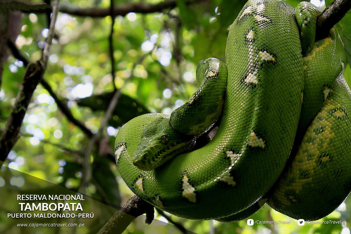 Impresiona la variedad de aves, mamíferos, reptiles, anfibios, peces y mariposas.