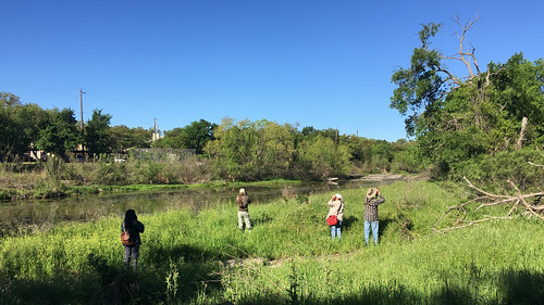 Searching for Vermilion Flycatcher