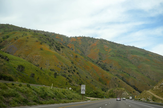 the hills are green. and orange.