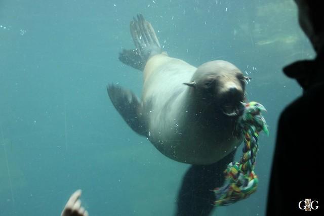 Zoo Bremerhaven 09.04.16 2.Teil106