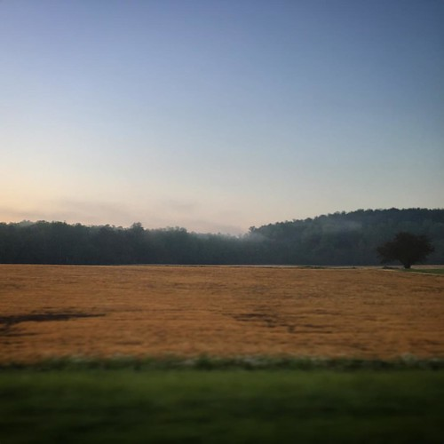 morning tree field misty fog square farm wheat country pasture squareformat lone lonely iphoneography instagramapp