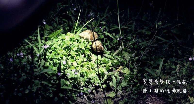 【綠島旅遊-活動】綠島行程安排規劃-幫寄居蟹找個家(貝殼)(寄居蟹安家計畫)