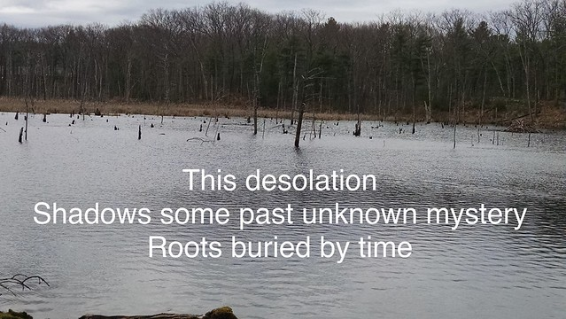 Image Haiku: Roots Buried by Time