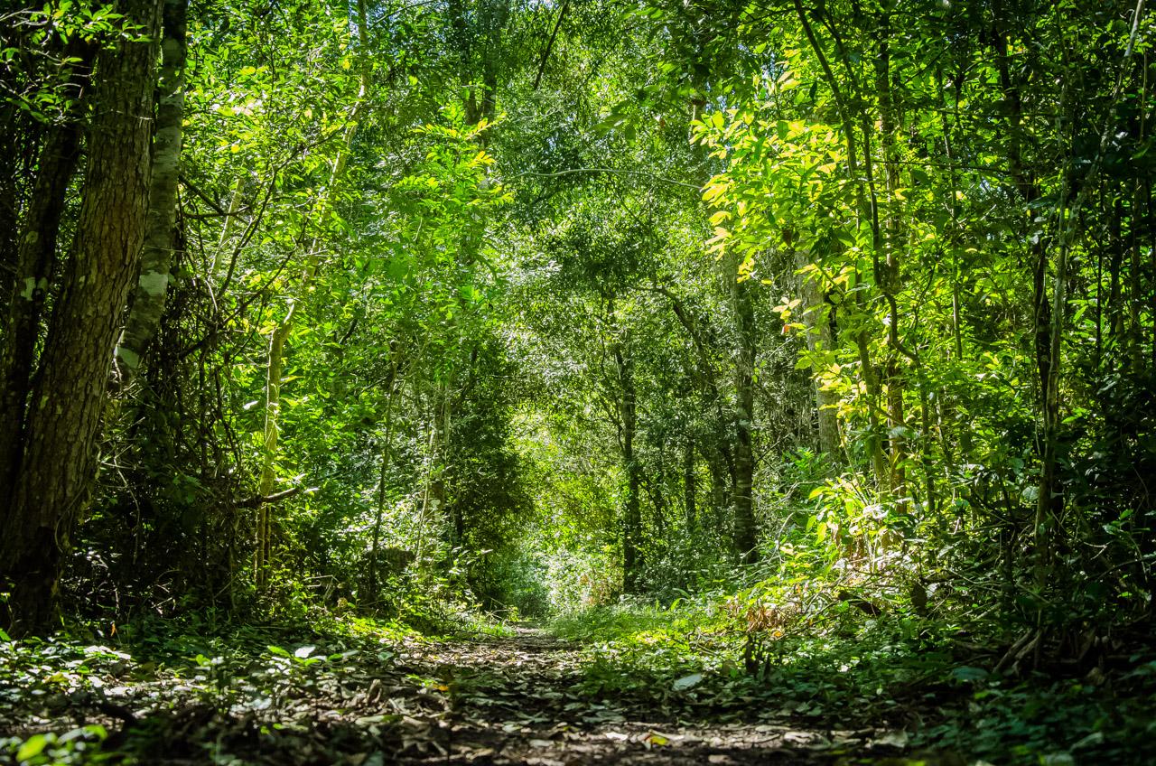 Hermosa selva rodea el circuito del arroyo Tagatiya, haciendo dificil el acceso. De no ser por los caminos que con el tiempo se fueron formando en visitas tras visitas, se demoraría mas tiempo en encontrar una ruta apta para llegar con vehículo. Esta dificultad de alguna manera ha beneficiado a la conservación del arroyo. (Elton Núñez)
