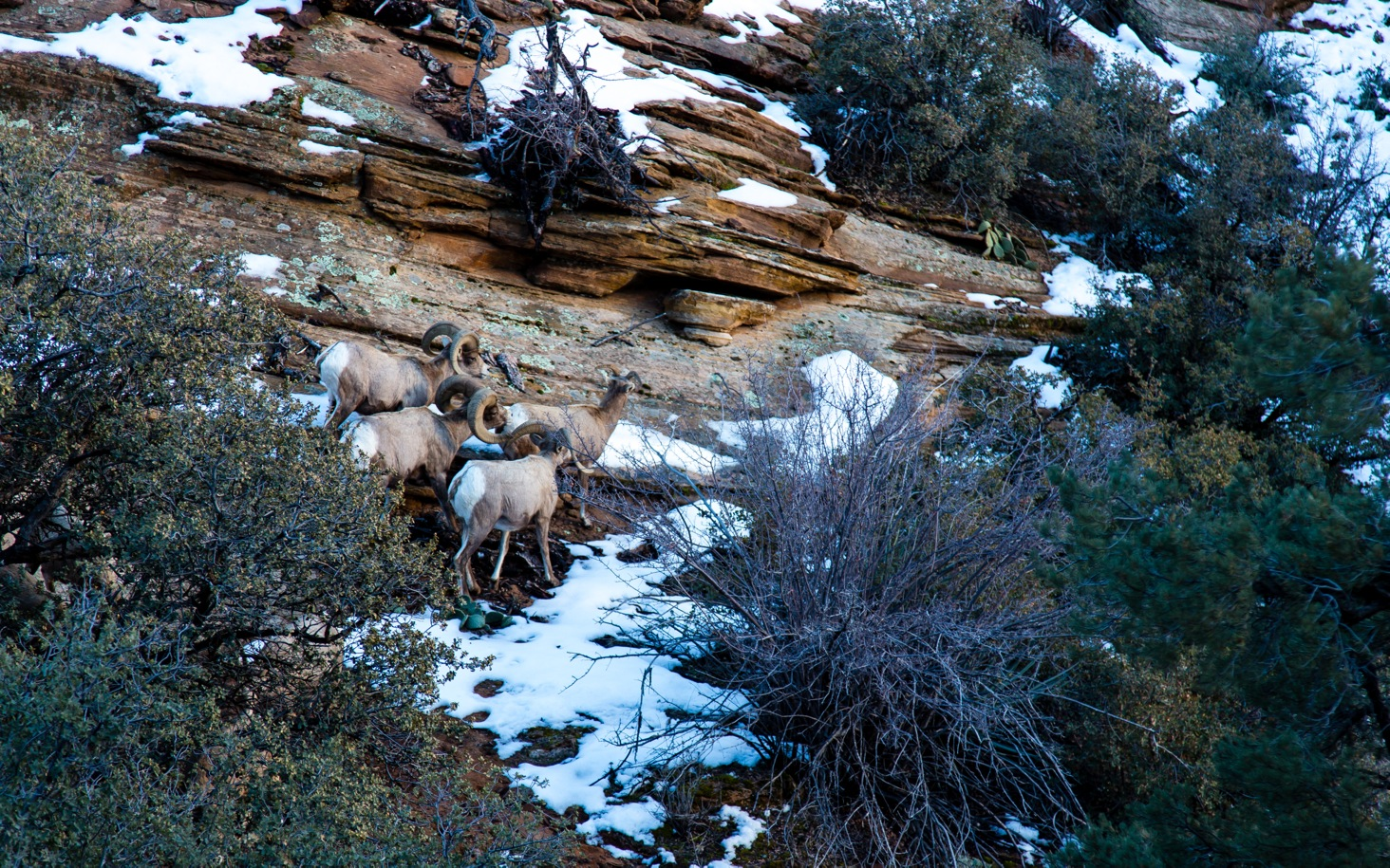 Zion National Park-9571