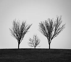 Three on a hill