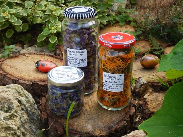 Plantas Medicinales silvestres y cultivadas