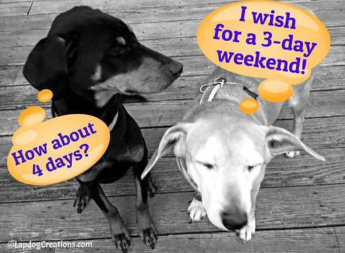 Sophie Wishes for 3-Day Weekends... Penny Wants 4! #rescueddogs #LapdogCreations ©LapdogCreations